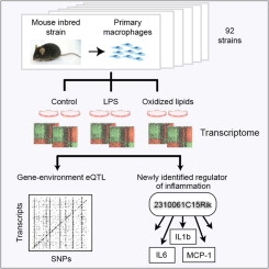 Unraveling Gene Environment Interaction >> Unraveling Inflammatory Responses Using Systems Genetics And Gene