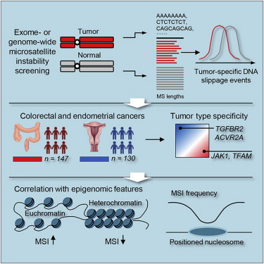 The Landscape Of Microsatellite Instability In Colorectal And Endometrial Cancer Genomes Sciencedirect