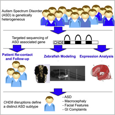 Disruptive CHD8 Mutations Define a Subtype of Autism Early in ...
