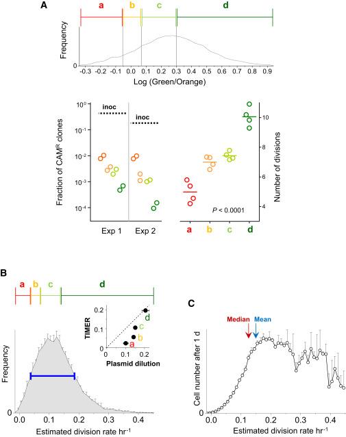 Phenotypic Variation of Salmonella in Host Tissues Delays