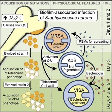 Evolution Of Resistance To A Last Resort Antibiotic In