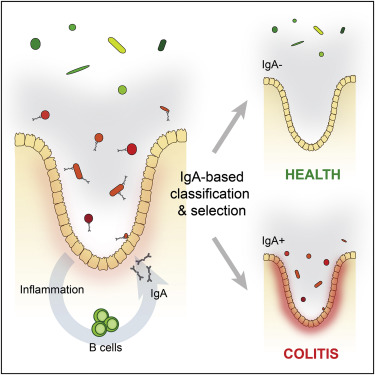 Immunoglobulin A Coating Identifies Colitogenic Bacteria in