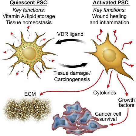 pancreatic cancer vitamins