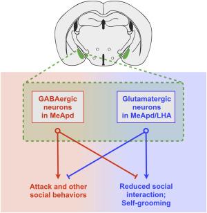 Antagonistic Control of Social versus Repetitive Self-Grooming