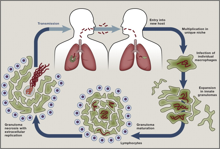 Host Evasion And Exploitation Schemes Of Mycobacterium Tuberculosis