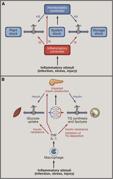 Homeostasis Inflammation And Disease Susceptibility Sciencedirect