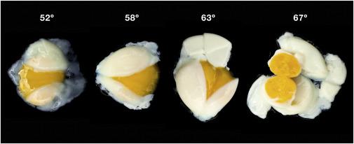 Biophysics Of Molecular Gastronomy Sciencedirect
