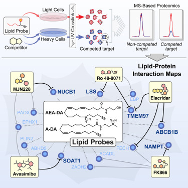 A Global Map Of Lipid Binding Proteins And Their Ligandability In