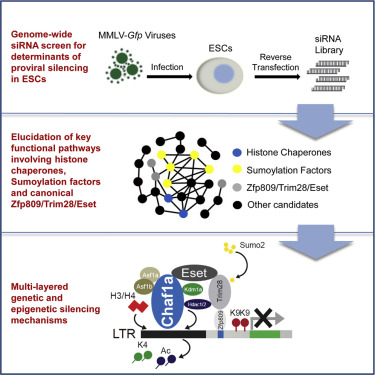 Systematic Identification of Factors for Provirus Silencing