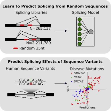 Learning the Sequence Determinants of Alternative Splicing from