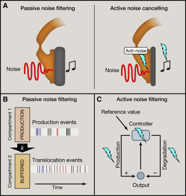 Passive Noise Filtering by Cellular Compartmentalization - ScienceDirect