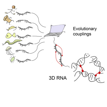 3D RNA and Functional Interactions from Evolutionary