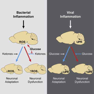 Opposing Effects of Fasting Metabolism on Tissue Tolerance