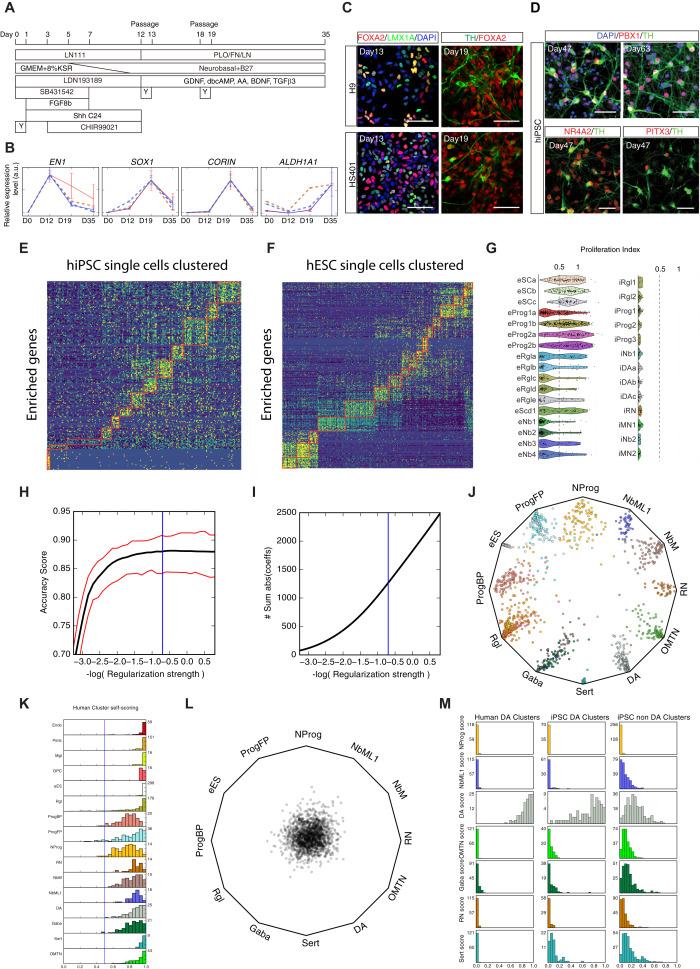 Molecular Diversity of Midbrain Development in Mouse, Human