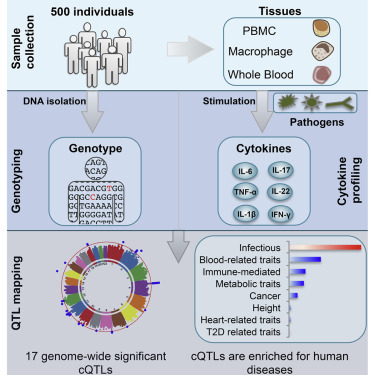 A Functional Genomics Approach to Understand Variation in