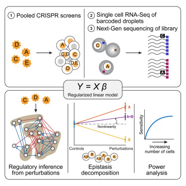 Perturb-Seq: Dissecting Molecular Circuits with Scalable Single-Cell