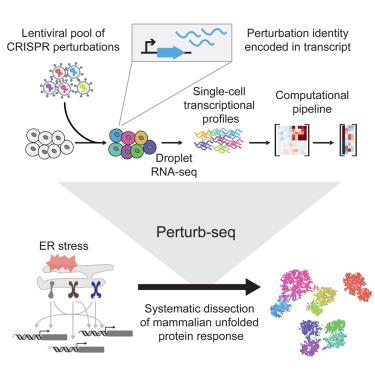 A Multiplexed Single-Cell CRISPR Screening Platform Enables