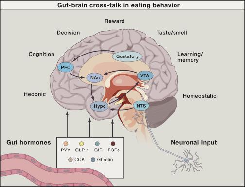 Gut Brain Cross Talk In Metabolic Control Sciencedirect