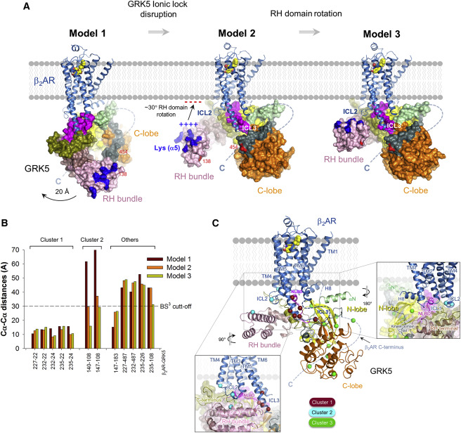 Structural and Functional Analysis of a β2-Adrenergic Receptor ...