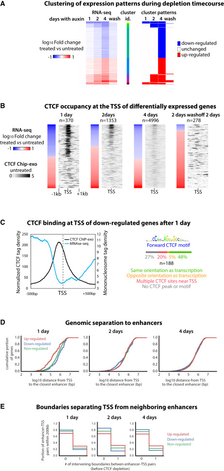 Targeted Degradation of CTCF Decouples Local Insulation of
