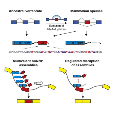 Identifying and validating alternative splicing events in las vegas