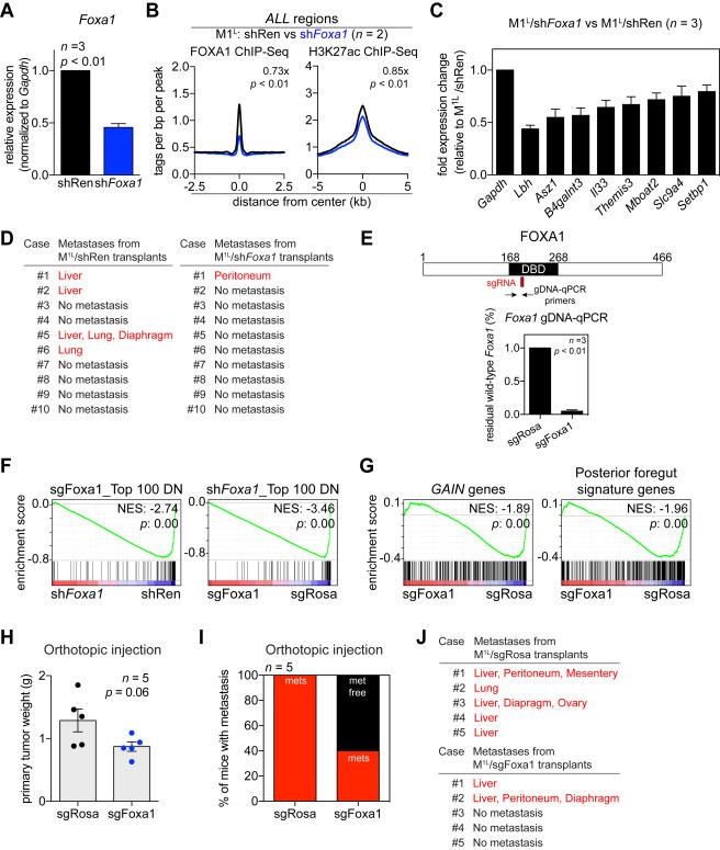 Enhancer Reprogramming Promotes Pancreatic Cancer Metastasis ...