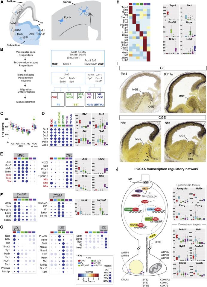 Transcriptional Architecture of Synaptic Communication