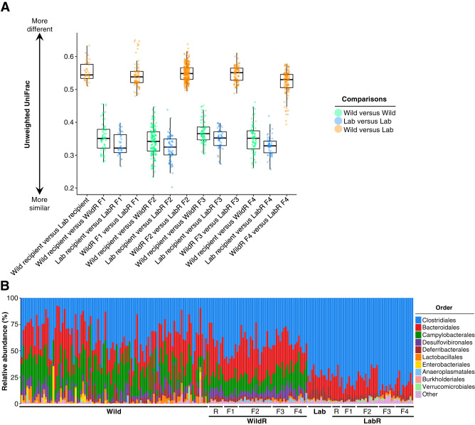 Wild Mouse Gut Microbiota Promotes Host Fitness and Improves Disease