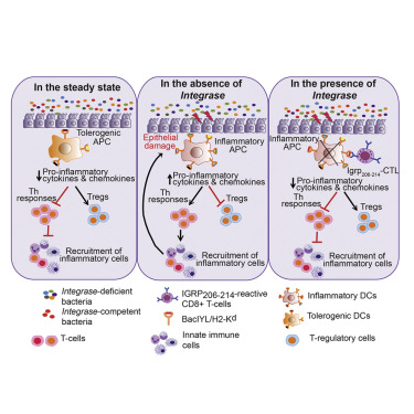 A Gut Microbial Mimic that Hijacks Diabetogenic