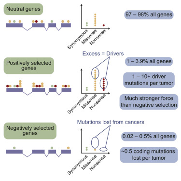 Universal Patterns Of Selection In Cancer And Somatic Tissues