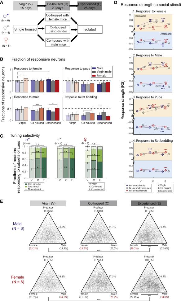 Brain Representations Of Social >> Neuronal Representation Of Social Information In The Medial Amygdala