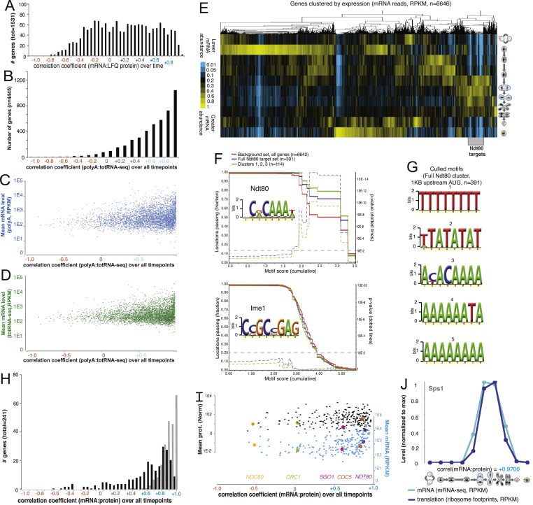 Pervasive Coordinated Protein Level Changes Driven By Transcript