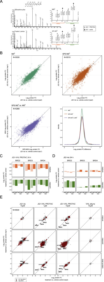 Multiplexed Proteome Dynamics Profiling Reveals Mechanisms