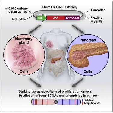 Gene Expression Patterns May Underlie >> Profound Tissue Specificity In Proliferation Control Underlies