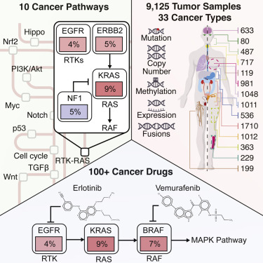 Oncogenic Signaling Pathways In The Cancer Genome Atlas Sciencedirect