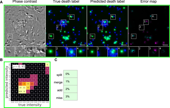 In Silico Labeling: Predicting Fluorescent Labels in