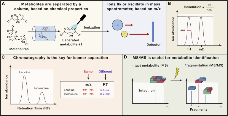 Metabolomics and Isotope Tracing - ScienceDirect