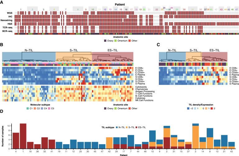 Interfaces of Malignant and Immunologic Clonal Dynamics in