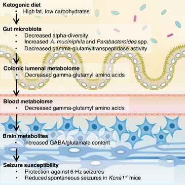 social effects of the keto diet for epilepsy