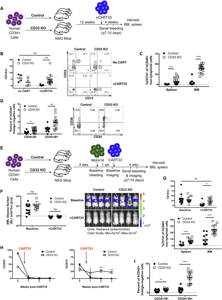 Genetic Inactivation of CD33 in Hematopoietic Stem Cells to Enable