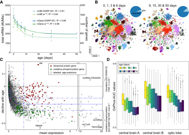 A Single-Cell Transcriptome Atlas of the Aging Drosophila Brain