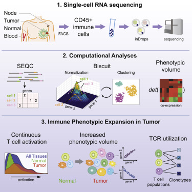 Single-Cell Map of Diverse Immune Phenotypes in the Breast