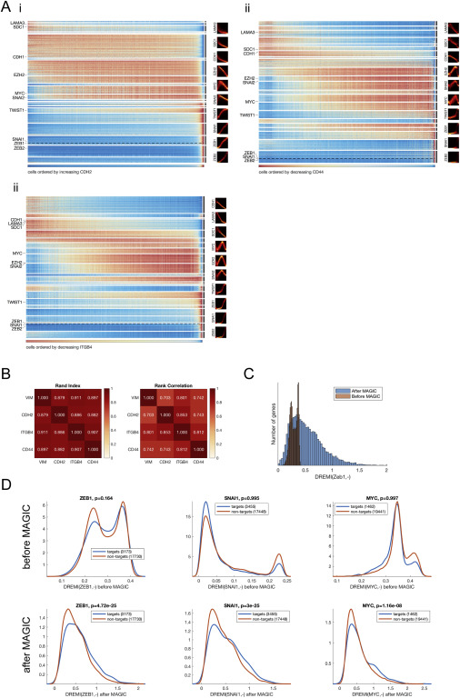 Recovering Gene Interactions from Single-Cell Data Using