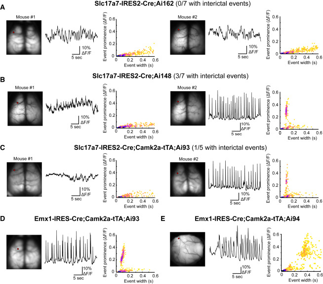 A Suite of Transgenic Driver and Reporter Mouse Lines with Enhanced