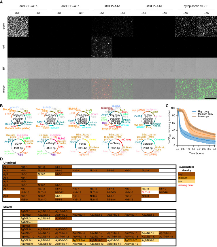 A Synthetic Bacterial Cell-Cell Adhesion Toolbox for Programming