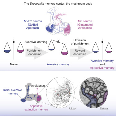 Integration Of Parallel Opposing Memories Underlies Memory Extinction Sciencedirect Yes, you read that correct, you can modify almost any value while the gpu is running. integration of parallel opposing
