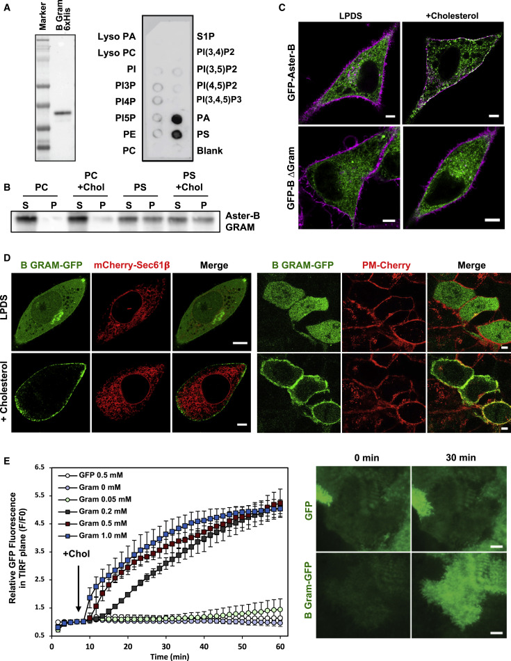 Aster Proteins Facilitate Nonvesicular Plasma Membrane to ER