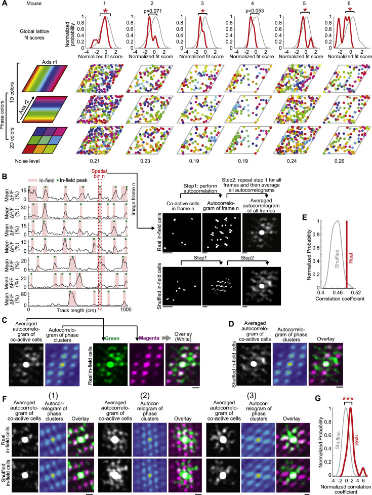 a map like micro organization of grid cells in the medial entorhinal