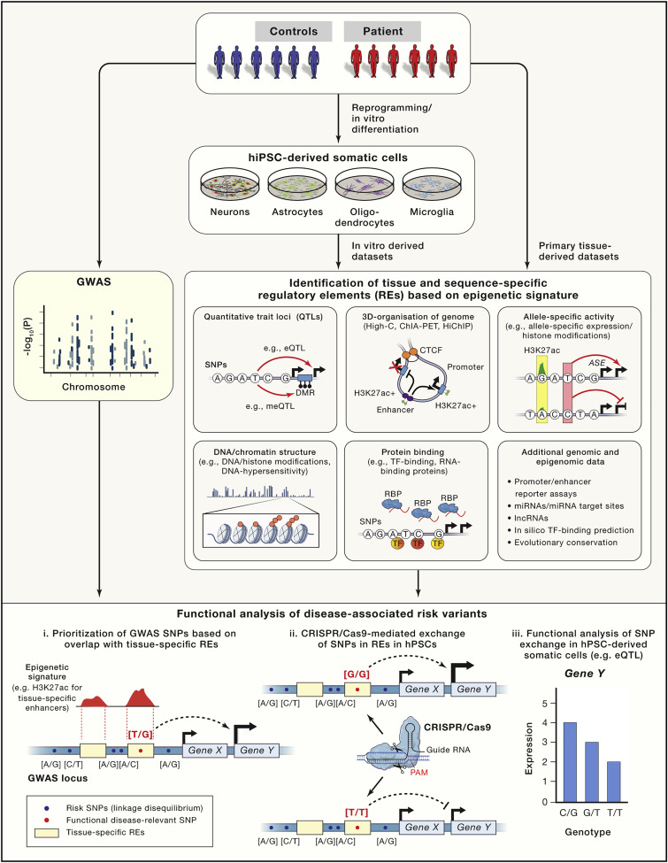 Stem Cells, Genome Editing, and the Path to Translational Medicine ... c4740c3d17b7
