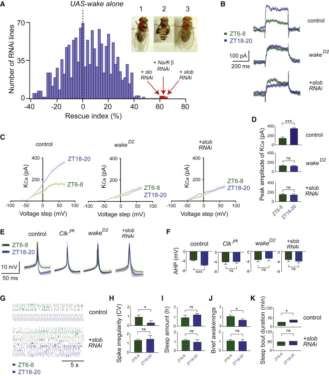 Clock-Generated Temporal Codes Determine Synaptic Plasticity to